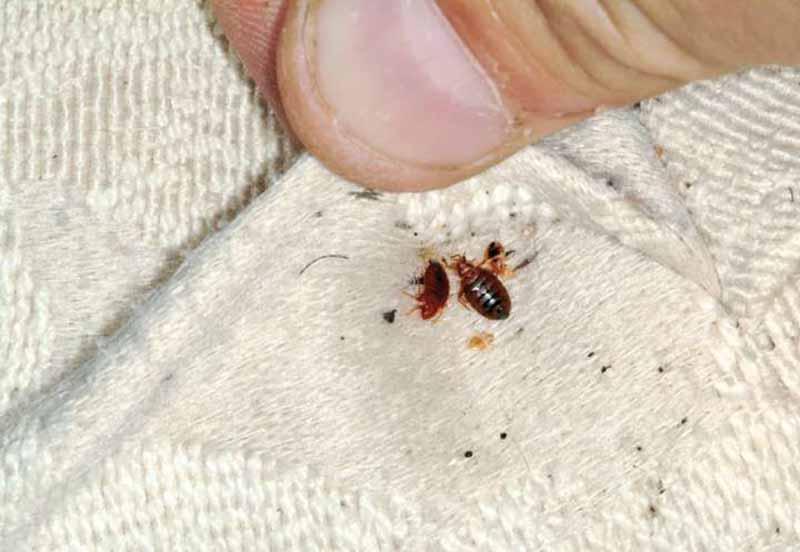 دفع انواع حشرات موذی