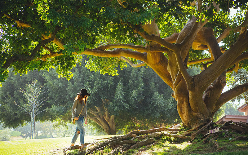 داستان صوتی کوتاه دختر و درخت