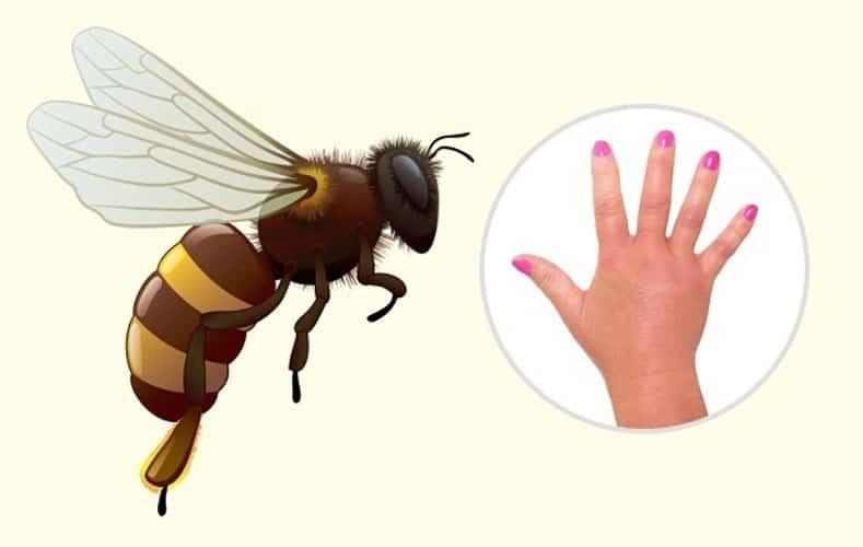 زنبور گاوی