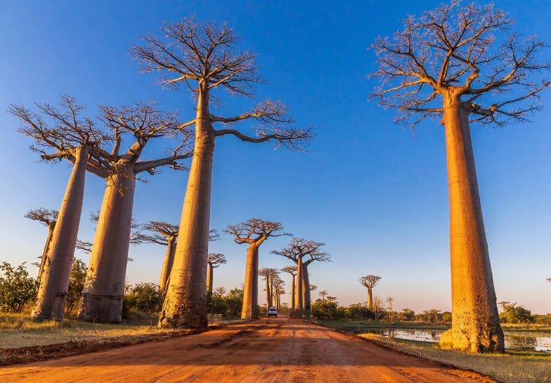 خیابان بائوباب در ماداگاسکار