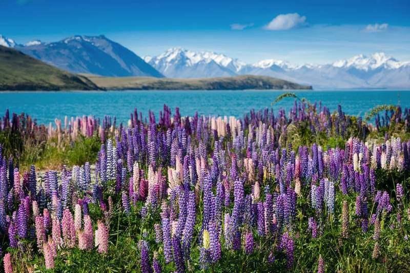 دریاچه تکاپو در نیوزیلند- زیباترین مکان های جهان