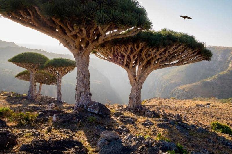 جزایر سوکوترا در یمن - زیباترین مکان های جهان