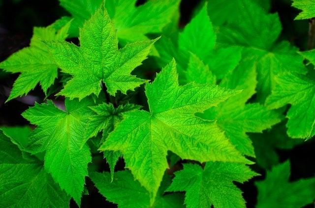 انتخاب رنگ برند | سبز