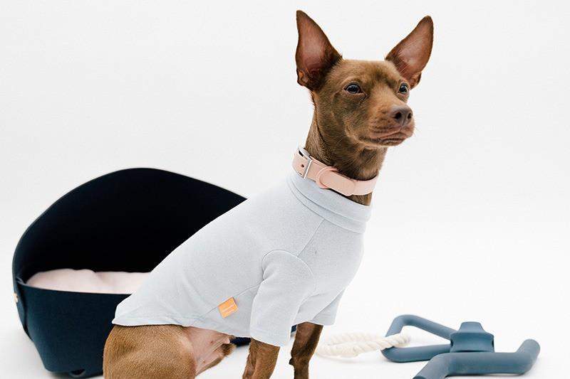 خرید لباس سگ