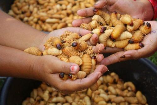 غذای چندش آور در آفریقای جنوبی