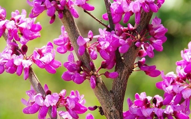 اسم گل ها