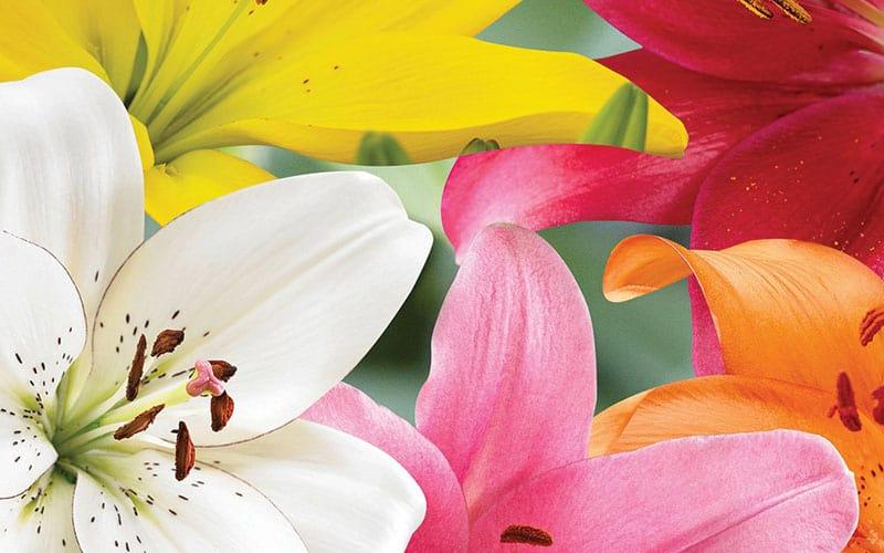 تصاویر گل ها